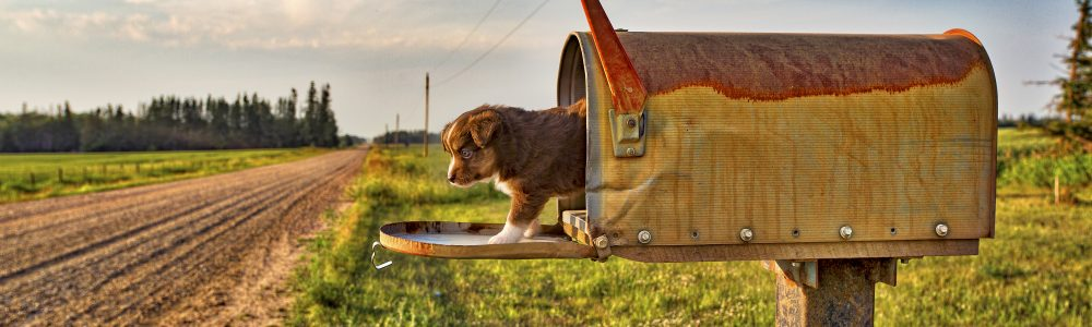 Puppy in Mailbox